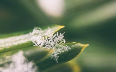 Winterurlaub + Öffnungszeiten
